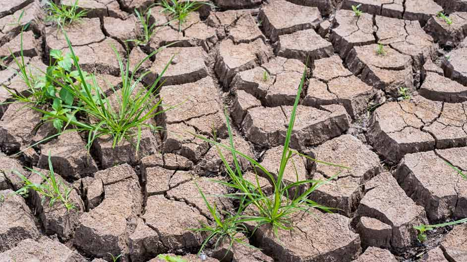 Combating climate change: how precision agriculture could help